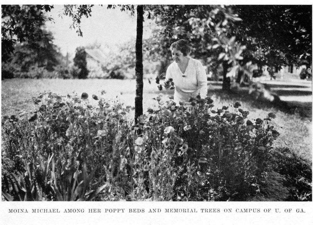 Moina Michael the Poppy Lady tending to her poppy flower garden